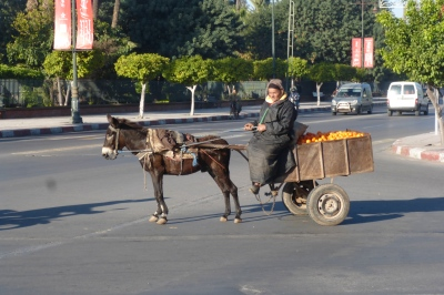 Donkey and cart navigating the traffic!